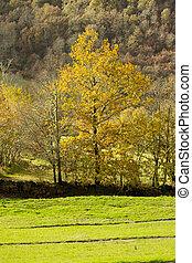 Yellow trees at green pasture