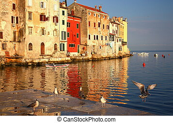 Rovinj - port with flying birds Croatia - Nice morning in...
