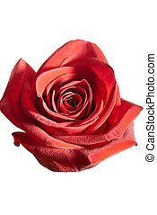 Rosebud - Beautiful fresh red rose bud isolated on a white...