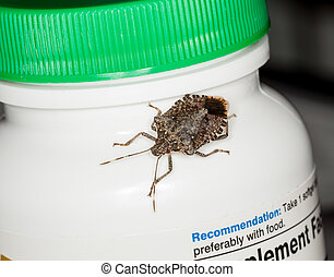Stink or shield bug on bottle of vitamins - Macro shot of...