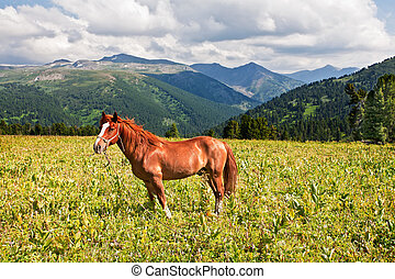 mountains landscape with horse Altai, Siberia
