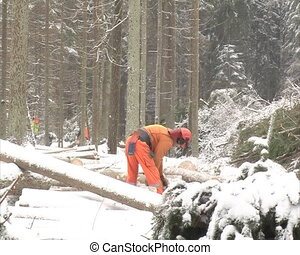 uniformed woodcutter cut - woodcutters cut snow-covered...