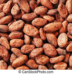 Cacao Beans - a Handful Cacao Beans full framed close up
