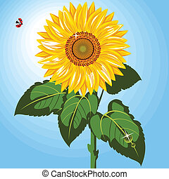 one sunflower - Beautiful sunflower against blue sky...
