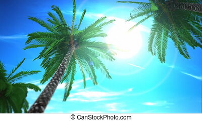 Looping Palm Trees - A loopable cg animation of palm trees...