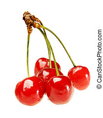 Five cherry on sprig - Five ripe fresh cherry on sprig