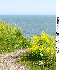 View of Finland Gulf with white yellow flowers in the foreground