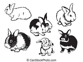 rabbits - Drawings of rabbits in various poses