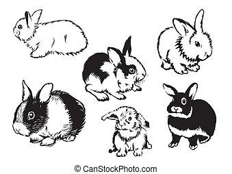 rabbits - Drawings of rabbits in various poses