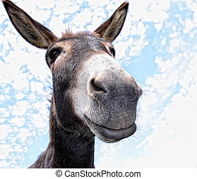 funny Donkey - Comical looking donkey looks in the cam with...