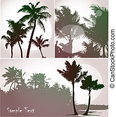 Palm trees, collection - Palm trees in sunset light, vector...