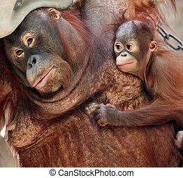 orang utan mother and her little baby