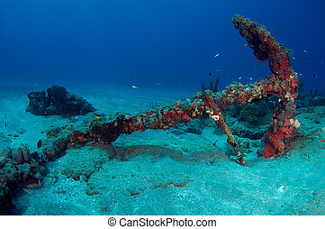 A old anchor with red sponges growing on it.