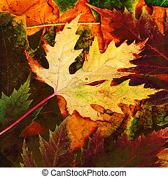 Beautiful backdrop of fallen autumn leaves for design