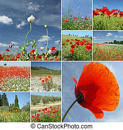 collage with poppies on fields and sky, Italy - scenic...