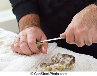 shucking an oyster - man shucking an oyster with a knife...