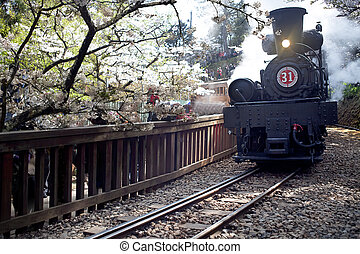 Old steam trains on railway with sakura in Alishan National...