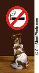 No Smoking. - Puppy looking at no smoking sign.