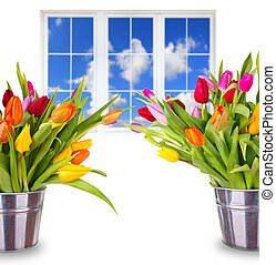Beautiful spring bouquets of tulips with window