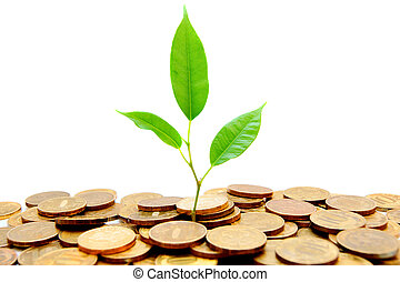 Plant and gold coins. On a white background.