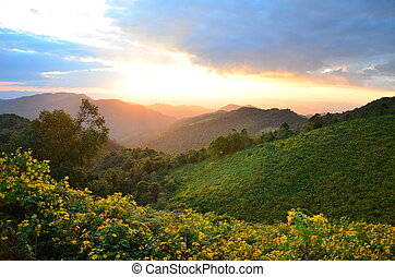 Amazing mountain - Yellow flower cover the mountain with the...