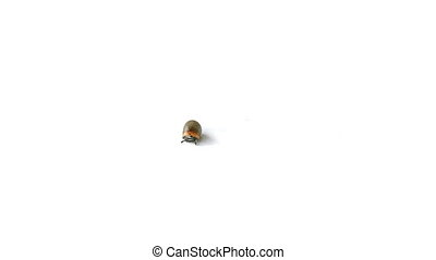 Unidentified larva crawling on white background
