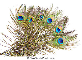 Peacock feathers - Detailed photo of a bunch of beautiful...