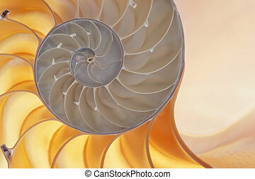 Nautilus shell - Detailed photo of a halved backlit shell of...