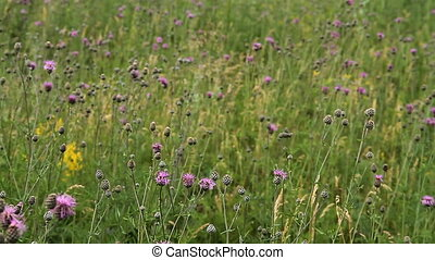 Meadow with flowers 007