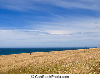 Grassy hill background