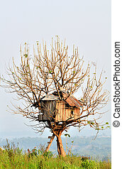 tree house - old house built on a tree