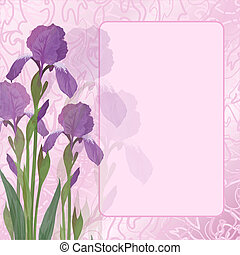 Flowers iris on pink background - Flowers iris and green...
