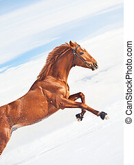 amazing sorrel horse in jump at blue sky background sunny...