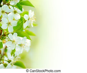 Spring blossoming flower on the white background Space for...