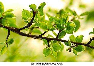 Spring Green Leaves in Bright Sunlight