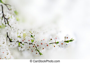 white spring flowers on a tree branch over grey sunny bokeh background close-up