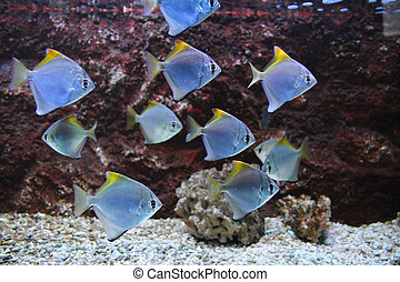exotic sea fishes on the aquarium background