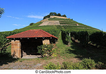 Vineyards at the foot of an old castle in Baden-Wuerttemberg
