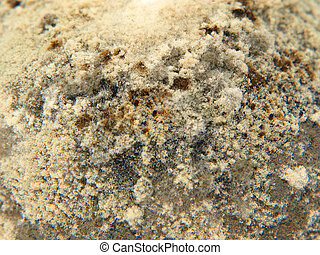 Mold taken closeup. - Mold taken closeup as abstract...