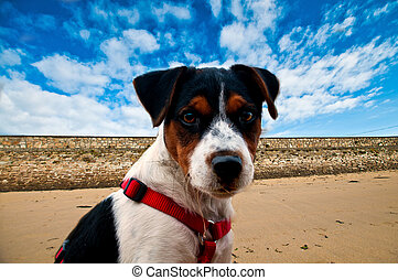 Young dog terrier