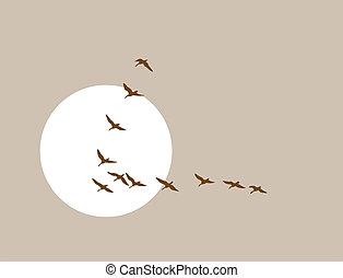 flying ducks silhouette on solar background, vector...