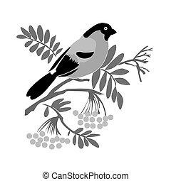bullfinch silhouette on rowanberry branch, vector illustration