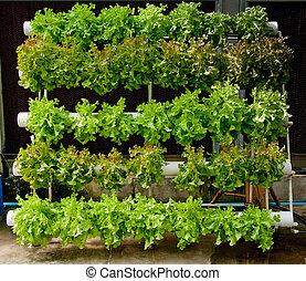 les, organique, hydroponic, légume, jardin