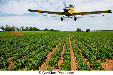Crop dusting - A yellow crop duster spraying a potato field