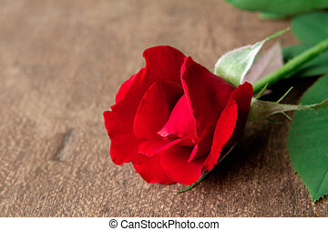 Red rose on wood floor