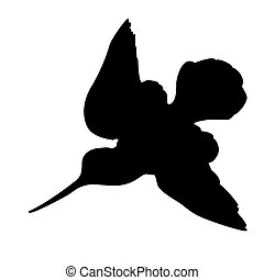 woodcock silhouette on white background,