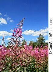 field flowerses on celestial background