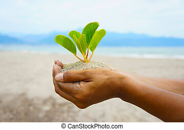 Eco Friendly - Women holding a small young plant in her...