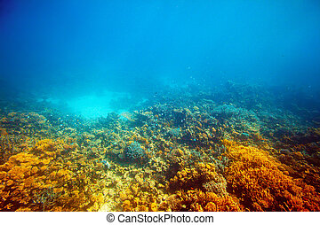 coral reef in Red sea - coral reef area in Red sea