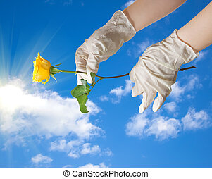 Hands of a doctor in a sterile gloves holding a dew in the sky